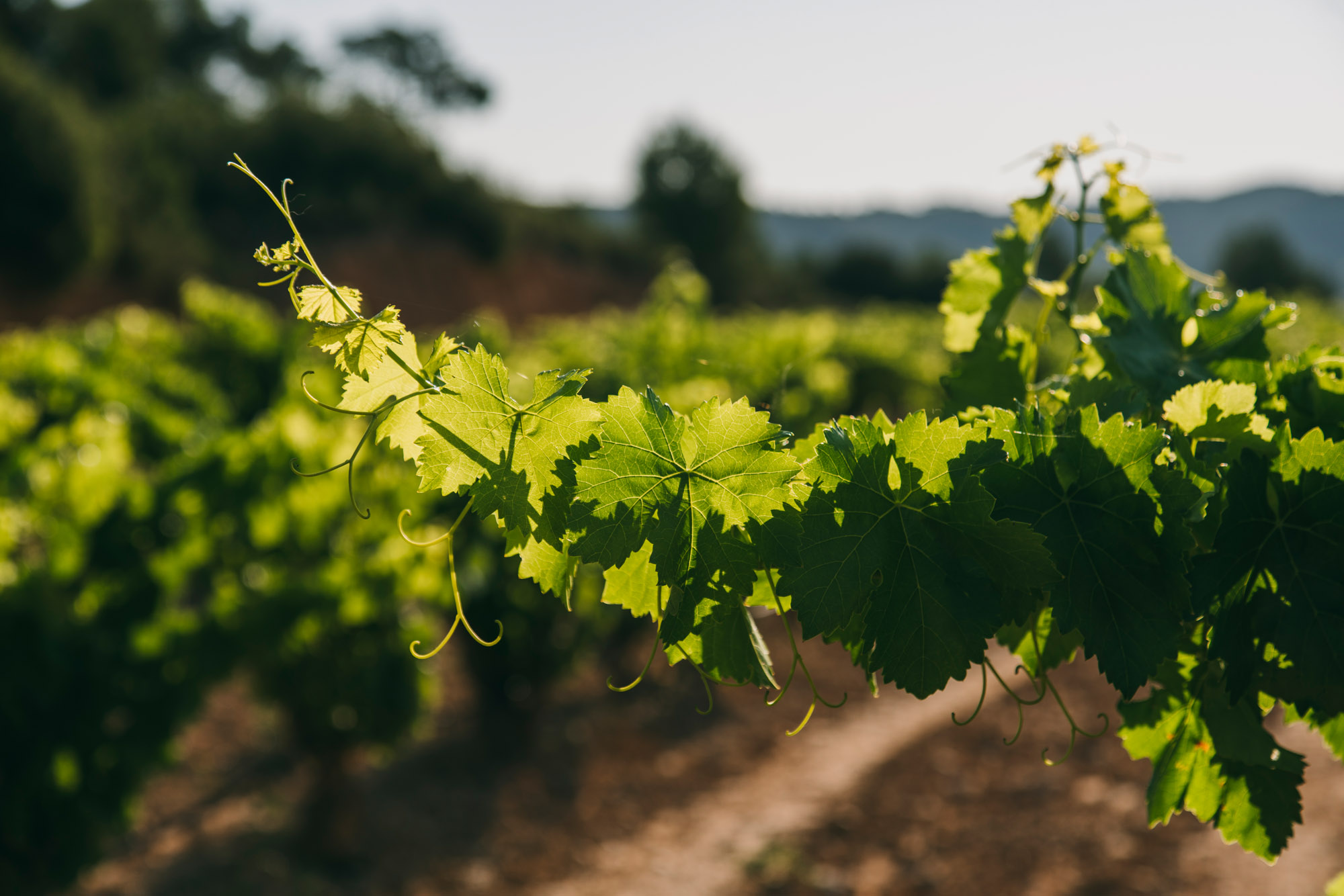 Natural wines…or not